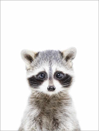 Foam board print  Baby Raccoon - Sisi And Seb