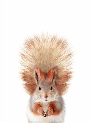 Premium poster  Baby squirrel - Sisi And Seb