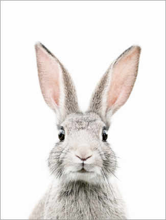 Gallery print  Bunny Portrait - Sisi And Seb