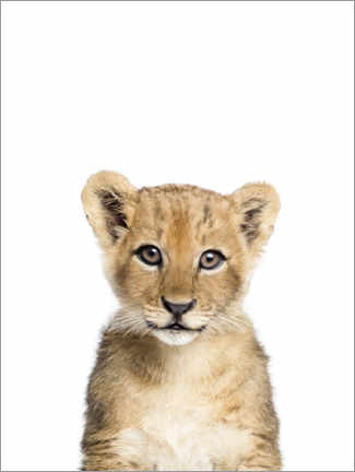 Foam board print  Baby Lion - Sisi And Seb