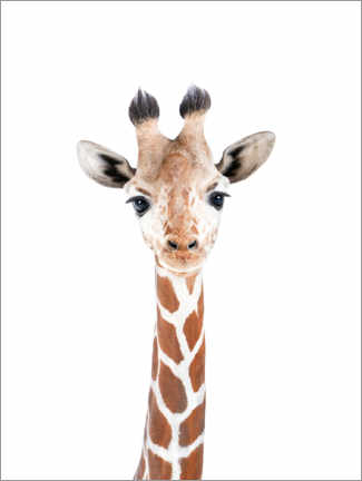 Wood print  Baby Giraffe - Sisi And Seb