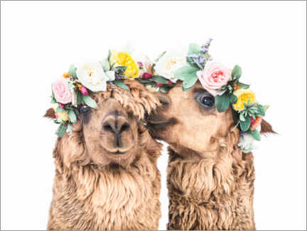 Premium poster  Flowers llamas - Sisi And Seb