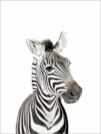 Foam board print  Baby Zebra - Sisi And Seb