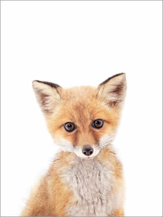 Canvas print  Baby fox - Sisi And Seb