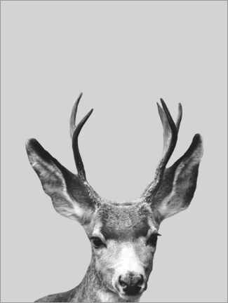 Gallery print  Gray deer - Finlay and Noa