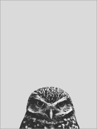 Premium poster  Gray owl - Finlay and Noa