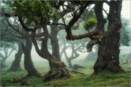 Canvas print  Creatures of the fog - Martin Podt