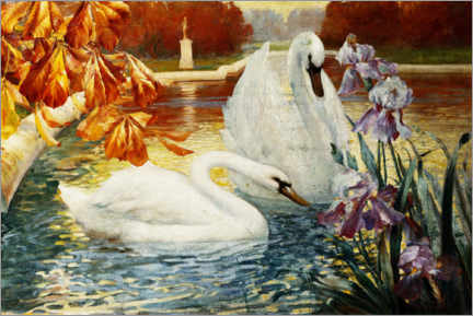 Gallery print  Swans on a pond - Fernand Toussaint