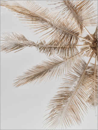 Gallery print  Golden palm VII - Magda Izzard