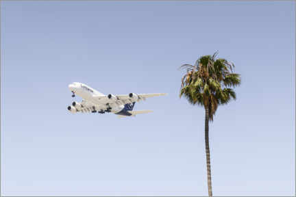 Foam board print  Airbus A380 over palm trees - Ulrich Beinert
