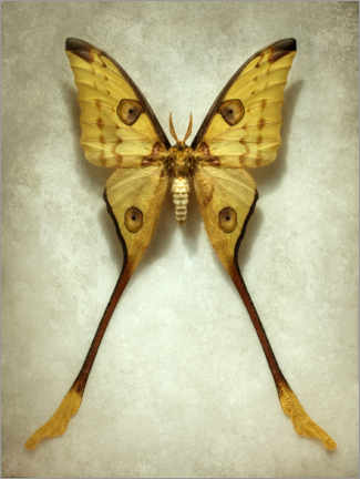 Premium poster Vintage butterfly III