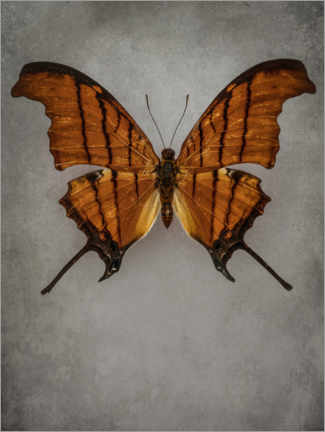 Premium poster Vintage butterfly IV