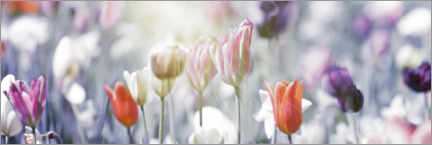 Premium poster Tulips in pastel colors