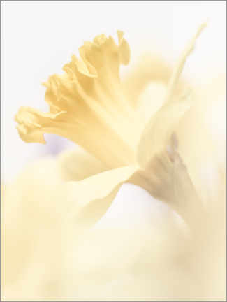 Premium poster One Daffodil is thousand pleasures
