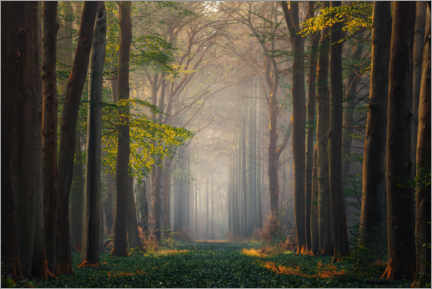 Acrylic print  Magical forest - Martin Podt