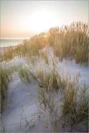 Acrylic print  Morning sun in the dunes on Sylt - Christian Müringer