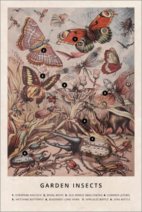 Premium poster  Garden insects - Wunderkammer Collection