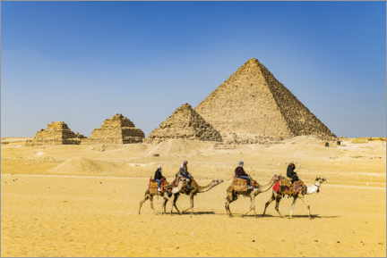 Premium poster  Camel riders in front of the pyramids of Giza - HADYPHOTO