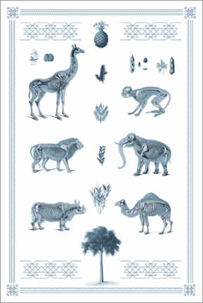 Wall sticker  Anatomy and folklore I - Wunderkammer Collection