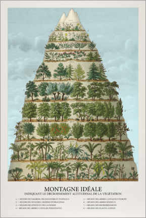 Canvas print  Trees and plants in the mountains (French) - Wunderkammer Collection