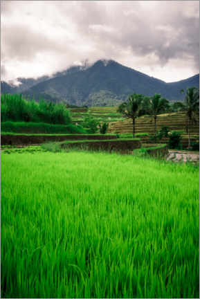 Premium poster  Rice field in Bali - Road To Aloha