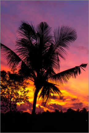 Premium poster  Palm tree in the sunset - Road To Aloha