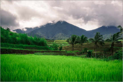 Premium poster  Rice fields in Bali - Road To Aloha