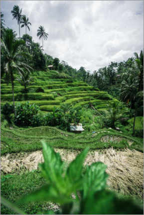 Premium poster  Rice terraces in Bali - Road To Aloha