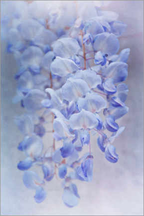 Premium poster Blue rain of flowers