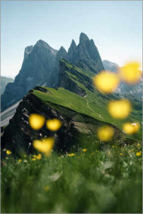 Canvas print  Seceda mountain view with alpine flowers - Road To Aloha