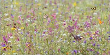 Premium poster  Colorful blooming wild spring flowers and butterflies - Martin Bergsma