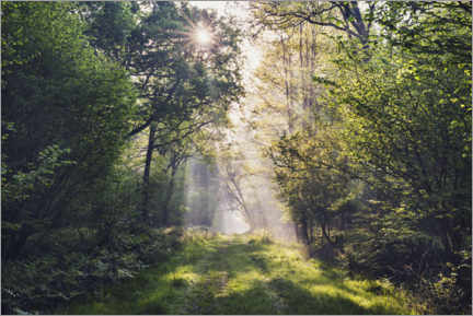 Aluminium print  Forest path with rays of light at sunrise - The Wandering Soul