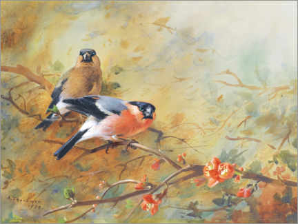 Premium poster Bullfinch and Japanese lavender heather