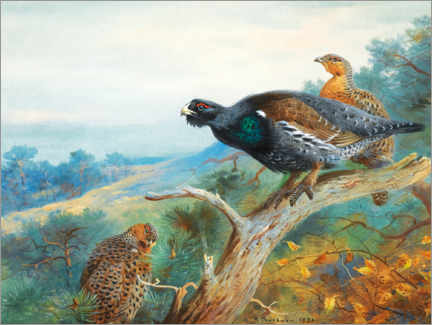 Gallery print  Capercaillie - Archibald Thorburn
