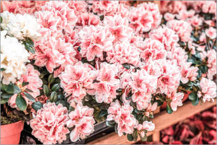 Acrylic print  Pink flowers in the market - Radu Bercan