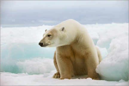Premium poster Polar bear on an ice floe