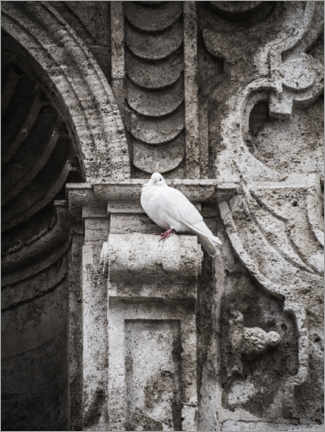 Premium poster  Pigeon on the facade - Art Couture