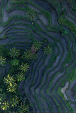 Gallery print  Tropical fields from above - Studio Nahili