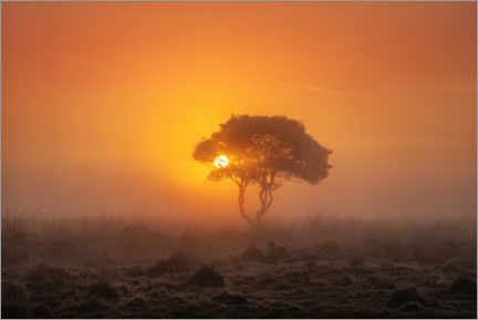 Gallery print  Sunset in the savannah - Martin Podt