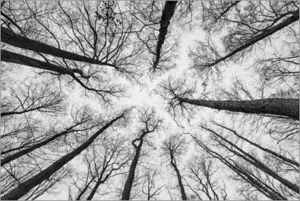 Aluminium print  A look into the treetops - Thomas Wegner