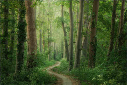 Premium poster Spring forest path