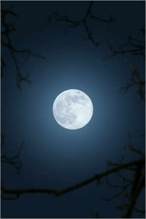 Premium poster Full moon in the night sky