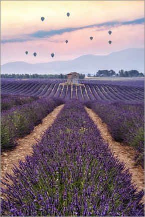 Premium poster  Balloonist Over a Sea of Flowers - André Wandrei