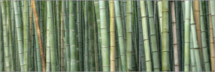 Canvas print  Bamboo - André Wandrei