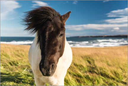 Aluminium print  Icelandic horse with a windy mane by the sea - Marcel Gross