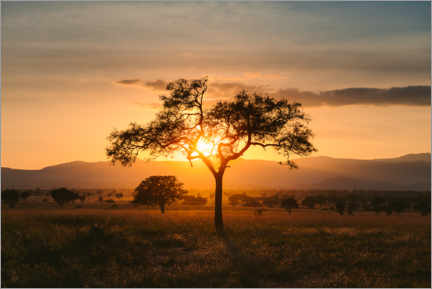 Wall sticker Sunset in the savannah of the Kidepo Valley, Uganda