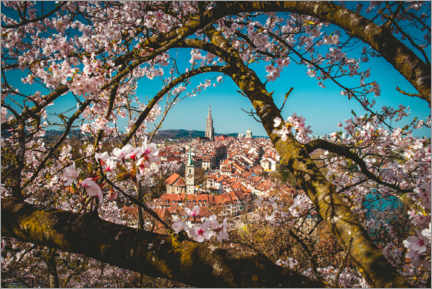 Premium poster  Old town of Bern framed behind a cherry tree - Marcel Gross