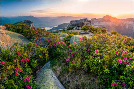 Canvas print  Sunset in the Bernese Alps with Alpine Roses - Marcel Gross