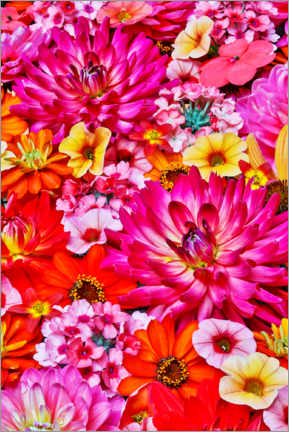 Gallery print  Flower pattern with a large group of flowers - Darrell Gulin