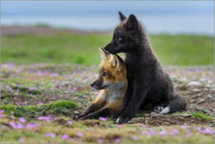 Premium poster Red fox kits